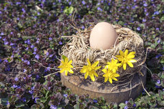 Hühnerei im geblühten Vogelnest Stockbild