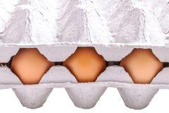 Hühnereien Stockfotografie