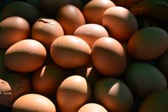 Hühnereien, Eier Lizenzfreies Stockfoto