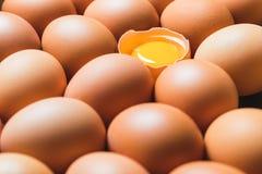 Hühnereien und Eigelb Stockbilder