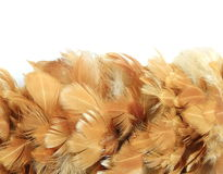 Hühnerfeder Stockfotografie