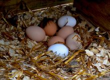 Hühnerhaus Lizenzfreies Stockfoto