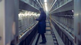 Hühnerhausarbeitskraft kontrolliert Hühner in den Käfigen stock video footage