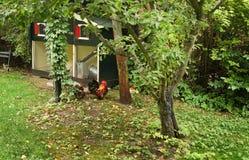 Hühnerhof mit Hahn Lizenzfreies Stockbild