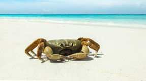Hühnerkrabbe auf dem weißen Meersand-Strand von Tachai-Insel, von Similan-Insel-Nationalpark, von Phangnga, von Thailand mit klar Lizenzfreie Stockfotos