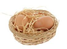 Hühnernest Lizenzfreie Stockfotos
