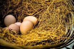 Hühnernest stockbild