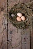 Hühnernest mit Eiern Lizenzfreie Stockfotografie