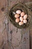Hühnernest mit Eiern Lizenzfreies Stockbild
