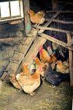 Hühnerstall Stockfoto