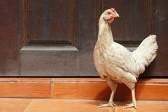 Hühnerstand Stockfotografie
