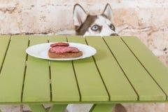 Hülse ` s Hund stiehlt ein Stück der Wurst von der Tabelle im Geheimnis von den Eigentümern Stockbild