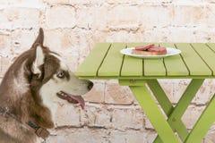 Hülse ` s Hund stiehlt ein Stück der Wurst von der Tabelle im Geheimnis von den Eigentümern Stockbilder