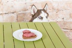 Hülse ` s Hund stiehlt ein Stück der Wurst von der Tabelle im Geheimnis von den Eigentümern Lizenzfreie Stockbilder