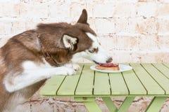 Hülse ` s Hund stiehlt ein Stück der Wurst von der Tabelle im Geheimnis von den Eigentümern Stockfotos