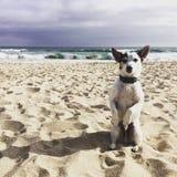 Hündchen auf dem Strandbitten Lizenzfreie Stockfotos
