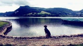 Hündchen schaut den See, den dieses ein Bild nahm durch mich ist! lizenzfreies stockbild