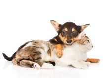 Hündchen- und Katzenfreundschaft Auf weißem Hintergrund Stockbild