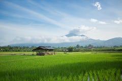 Hütte auf dem Reisgebiet Stockfotos
