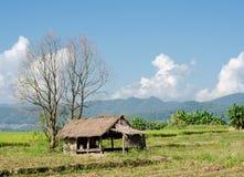 Hütte auf dem Reisgebiet, Landwirtschaft in Thailand Lizenzfreies Stockbild