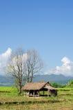 Hütte auf dem Reisgebiet, Landwirtschaft in Thailand Stockbild