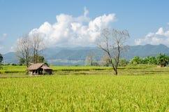 Hütte auf dem Reisgebiet, Landwirtschaft in Thailand Lizenzfreies Stockfoto