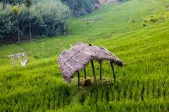 Hütte im Reisfeld lizenzfreies stockfoto