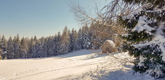 Hütte im Wald stockfoto