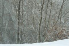 Hütte im Winterwald Stockfoto