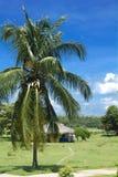 Hütte und Palme in Cienfuegos. lizenzfreies stockbild