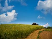 Hütte, wenn der Sunn-Hanf gewachsen wird Lizenzfreie Stockfotos