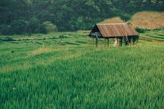 Hütten auf den grünen Reisgebieten in der Terrasse lizenzfreies stockfoto