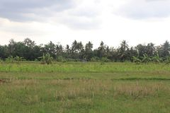 Hütten auf den Reis-Gebieten lizenzfreies stockbild
