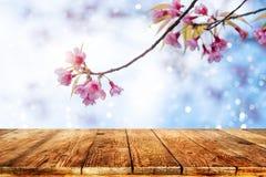 H变粉红色在天空背景的樱花花佐仓在春季 免版税图库摄影