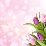 härliga purpura tulpan Arkivfoto
