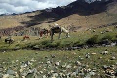 härligt berg för grupphästla som trekking Royaltyfri Foto