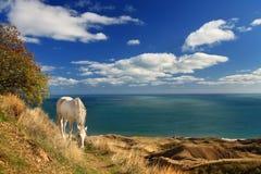 häst nära havswhite Royaltyfri Fotografi