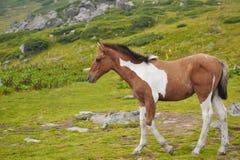 hästbarn Royaltyfri Fotografi