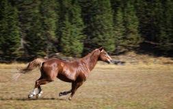 hästrunning arkivfoto