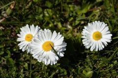 H?bsche Blumen auf gr?nem Hintergrund stockfoto