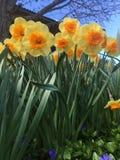 H?bsche Blumen lizenzfreie stockbilder