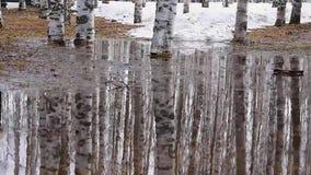 H?gar drivor av gammal sn?, p?lar i bj?rken parkerar p? v?ren Yttersidan av vattenkrusningarna fr?n vinden stock video