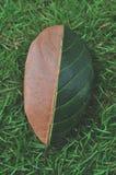 H?lftegr?n und halbtrockenes Herbstblatt auf Hintergrund des gr?nen Grases stockfotografie