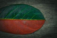 H?lftegr?n und halbtrockenes Herbstblatt auf h?lzernem Hintergrund stockbild