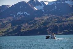 H?llande ?gonen p? fartyg f?r val med passagerare som ut g?r Husaviken f?r waching av puckelryggvalet iceland arkivbild