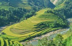 Mui Giay spot and Terraced rice field of the H`Mong ethnic people royalty free stock image