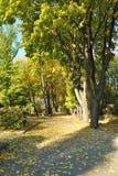 höstbotanisk trädgård Arkivbild