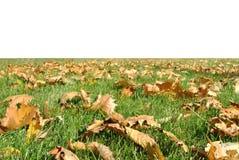 höstliga gräsgreenleaves konspirerar yellow Royaltyfria Foton