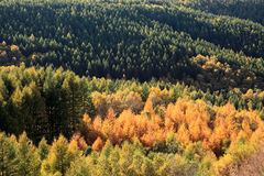 höstskog Fotografering för Bildbyråer