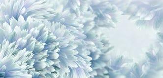 H?rlig bakgrund f?r blom- turkos Blommor och kronblad av enr?d dahlia N?rbild vita tulpan f?r blomma f?r bakgrundssammans?ttnings royaltyfri bild